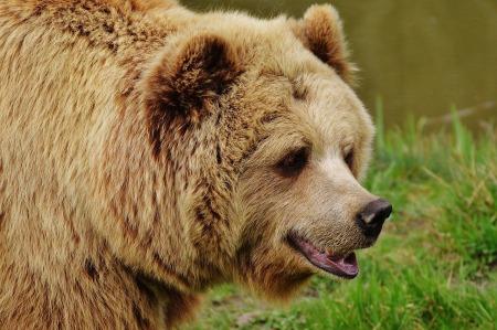 bear-1315128_1280