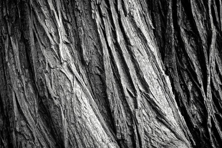 tree-2106115_1280.jpg